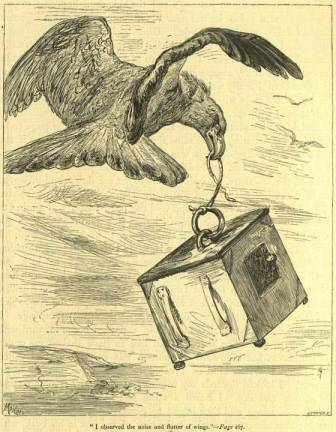 I observed the noise and flutter of wings.